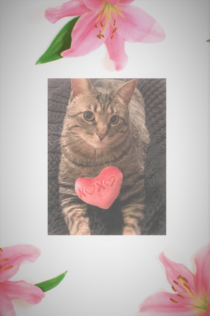 13 - help animal shelters with the snuggles project 1; picture of cat fiona