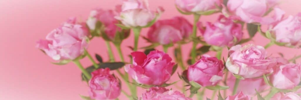 Home page - pink flowers