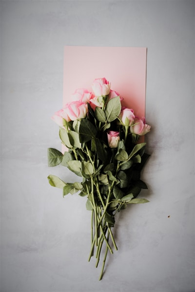 How to Encourage Someone (Why You Should Do It) roses