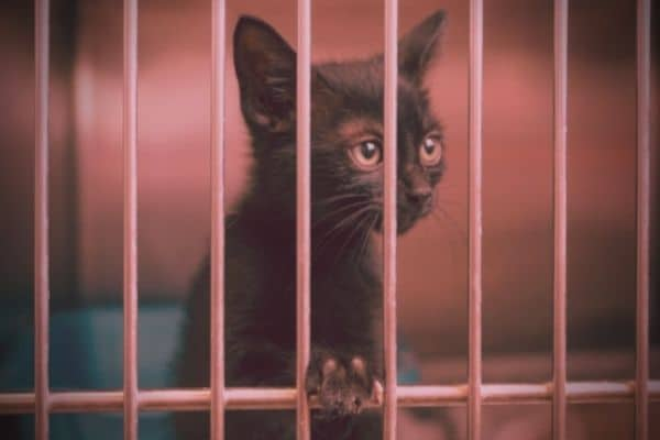 10 Ways To Help Animal Shelters Using Your Unique Talents