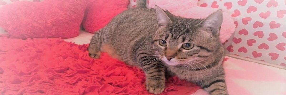 cat rescue tender loving cats - fiona the cat