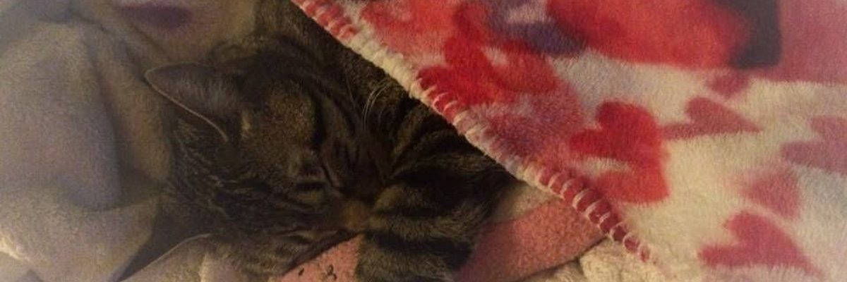 How to Help Animal Shelters with the Snuggles Project